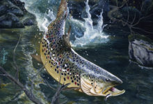 Brown trout/oil( Rapala)