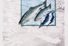 Salmon & seatrout (cover)
